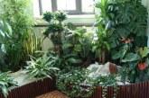 ۱۰ گیاه تصفیه کننده هوای خانه به پیشنهاد ناسا